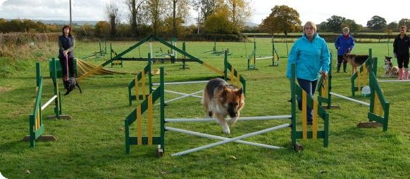Dog agility training at DogWise, Mere, Wiltshire