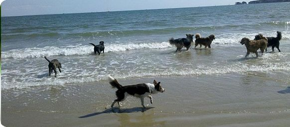 Dog Pack Walks in the countryside, or at the beach