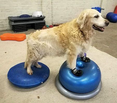 Fit Paws Dog Gym Keep Fit
