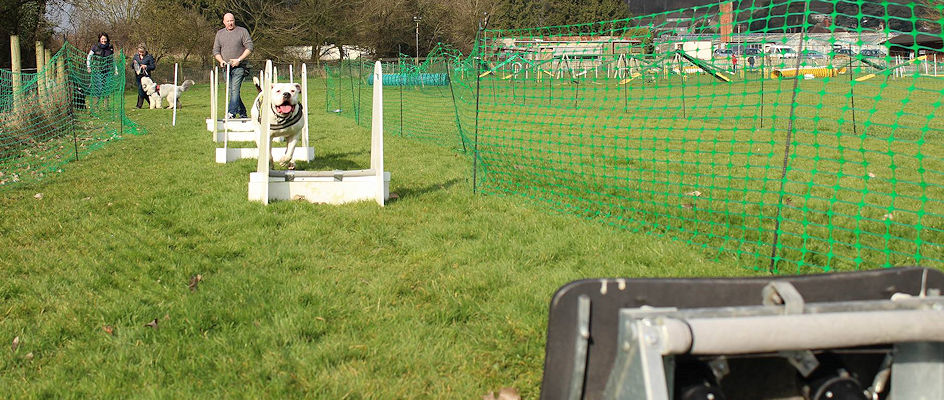 Dogwise outside dog training flyball